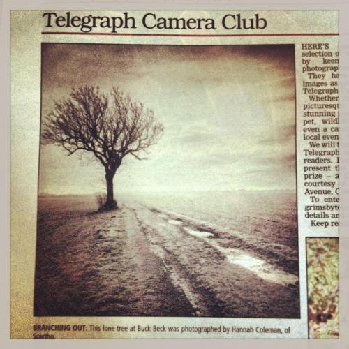 The lone tree picture made the GE Telegraph in the camera  club