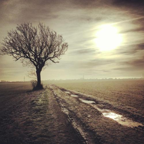 The lone tree in the bleakness