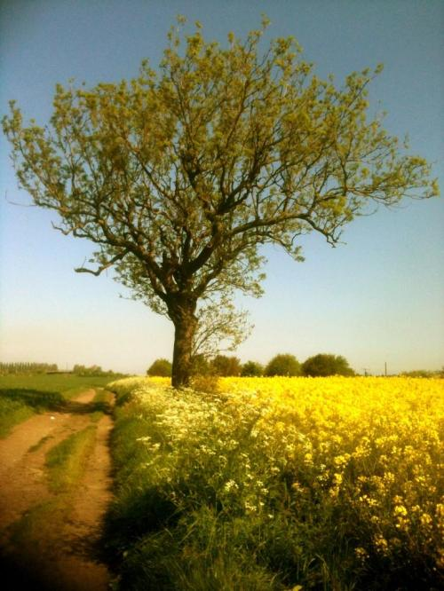 I had to put this in as this is the lone tree in Spring what a difference