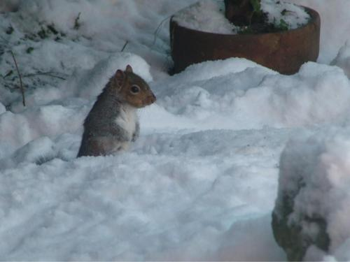 Mr Squirrel Freezing his nuts