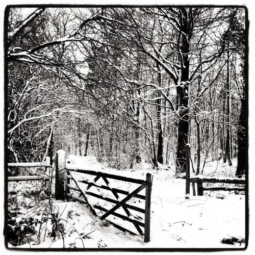 Like the chronicles of Narnia the Lincolsnhire wolds by Hannah Coleman
